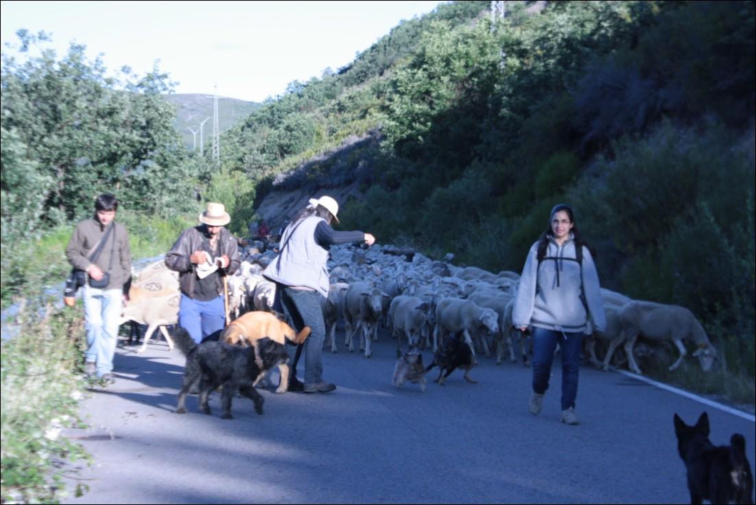 Caminando con los pastores